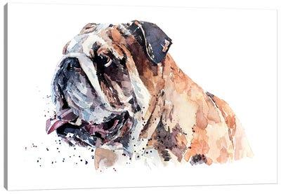 English Bull Dog II Canvas Art Print
