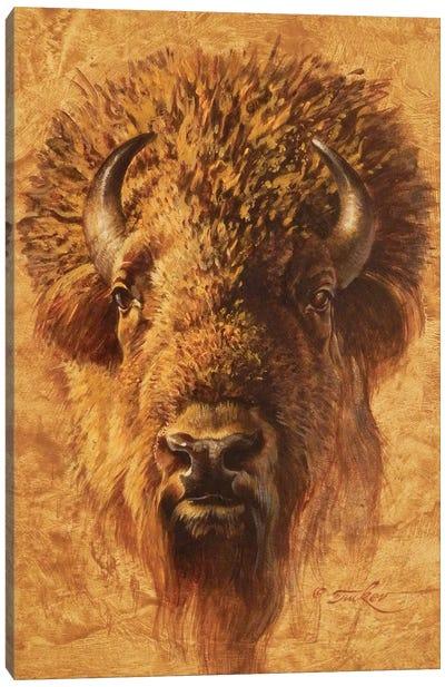 Bison Bull Portrait Canvas Art Print