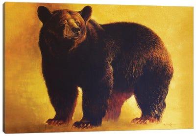 Black Bear Boar Canvas Art Print