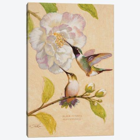 Black-Chinned Hummingbirds Canvas Print #EZT17} by Ezra Tucker Canvas Wall Art
