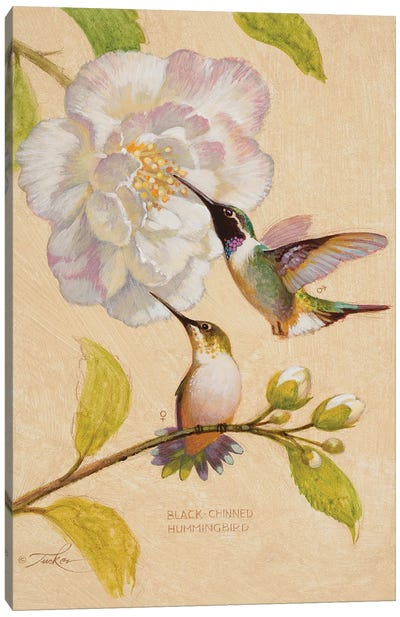 Black-Chinned Hummingbirds Canvas Art Print