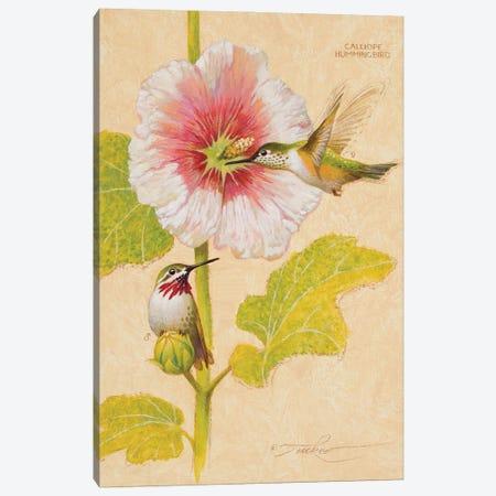 Calliope Hummingbird Male & Female Canvas Print #EZT21} by Ezra Tucker Canvas Wall Art