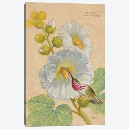 Calliope Hummingbird Male Canvas Print #EZT22} by Ezra Tucker Canvas Artwork