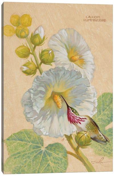 Calliope Hummingbird Male Canvas Art Print