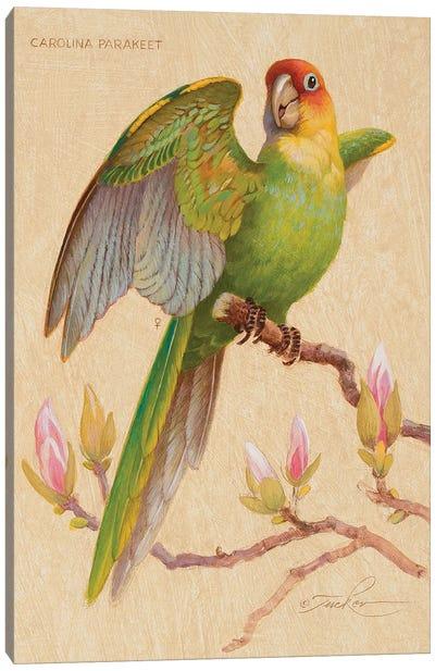 Carolina Parakeet & Magnolia Canvas Art Print