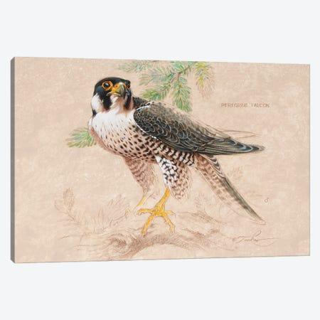 Peregrine Falcon (M) Canvas Print #EZT42} by Ezra Tucker Canvas Artwork