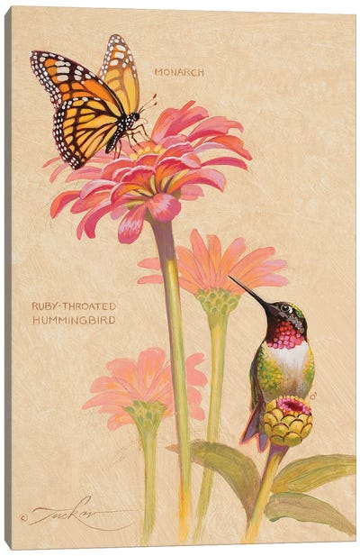 Ruby-Throated Hummingbird & Monarch Canvas Art Print