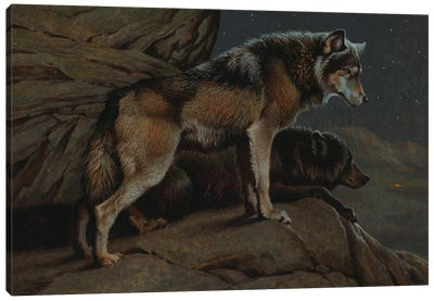 Scent Of Man- Wolves At Night Canvas Art Print