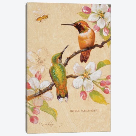 Roufous Hummingbirds III Canvas Print #EZT55} by Ezra Tucker Canvas Artwork