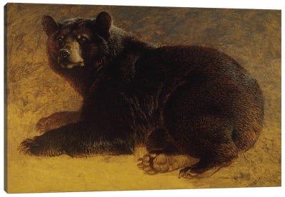 Walnut Canvas Art Print