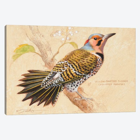 Yellow-Shafted Flicker Canvas Print #EZT73} by Ezra Tucker Canvas Print
