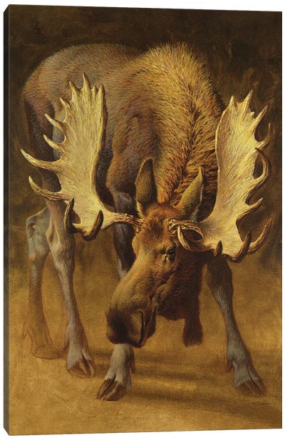 Yellowstone Moose Canvas Art Print