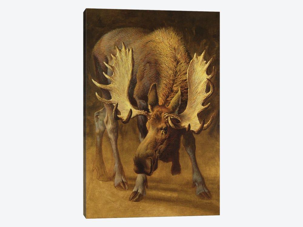 Yellowstone Moose by Ezra Tucker 1-piece Canvas Wall Art