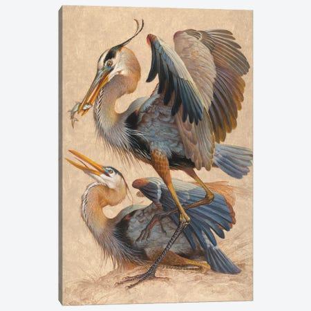 Great Blue Herons Canvas Print #EZT77} by Ezra Tucker Canvas Wall Art