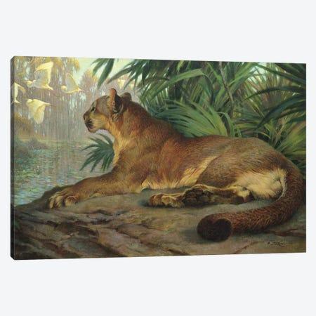 Lion And Egrets Canvas Print #EZT78} by Ezra Tucker Art Print