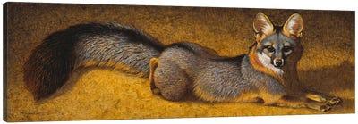 A Desert Dandy Canvas Art Print