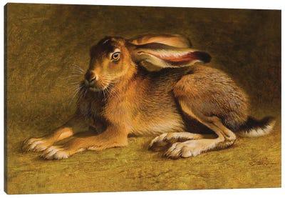 A Noble Black-tailed Jack Canvas Art Print