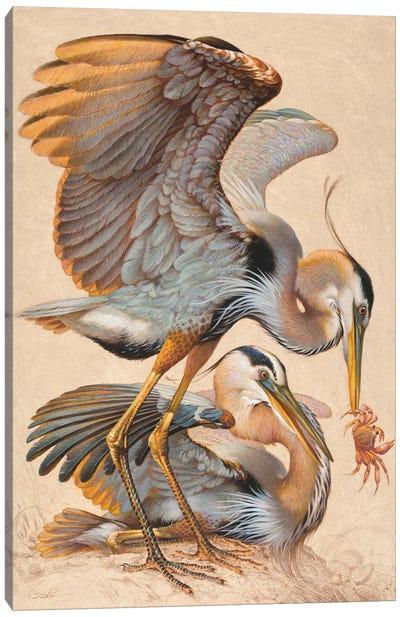 Crabbing Canvas Art Print