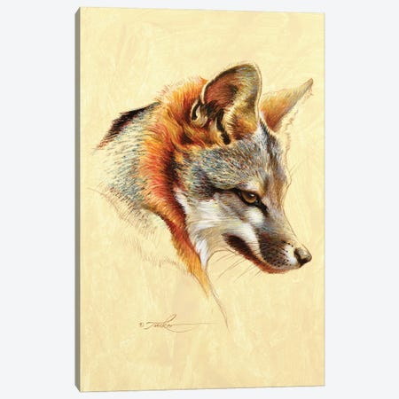Gray Fox Portrait Canvas Print #EZT88} by Ezra Tucker Canvas Art