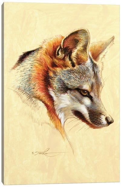 Gray Fox Portrait Canvas Art Print