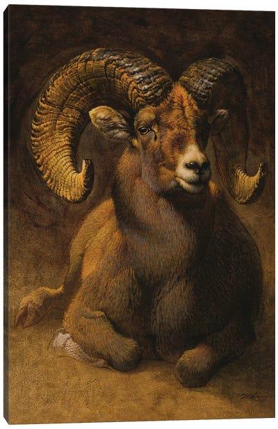 Rocky Mountain Ram Canvas Art Print