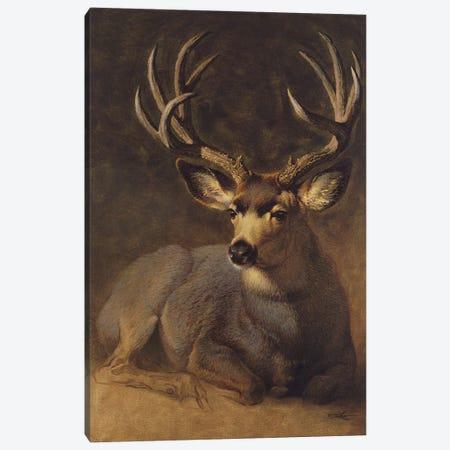 Winter Grey Buck Canvas Print #EZT93} by Ezra Tucker Canvas Art Print