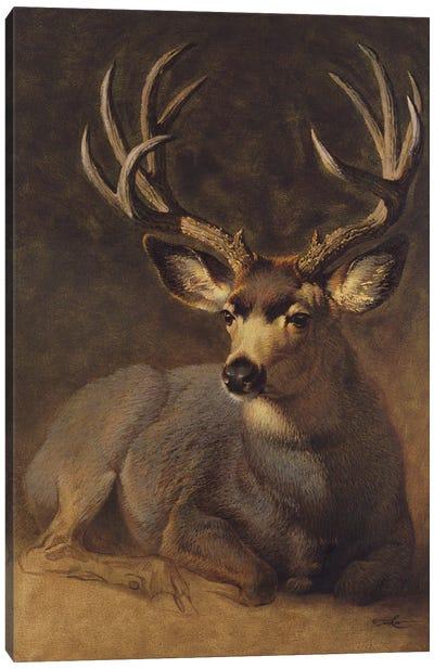 Winter Grey Buck Canvas Art Print