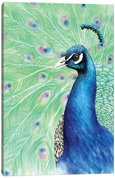 Mr. Peacock Canvas Art Print