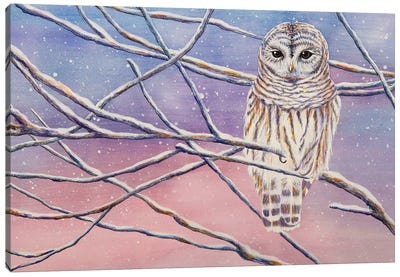 Snowy Barred Owl Canvas Art Print