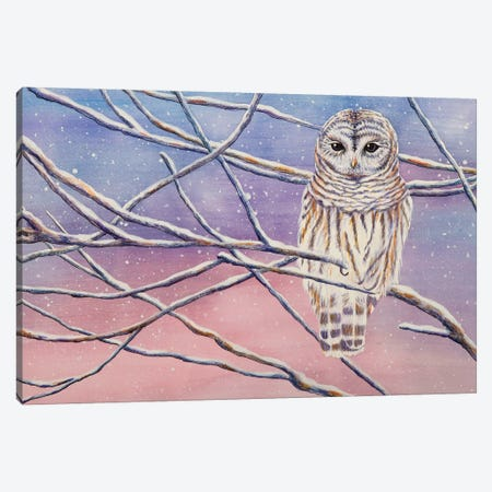 Snowy Barred Owl Canvas Print #FAB47} by Michelle Faber Art Print