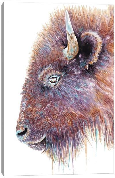 Spirit Of The West Buffalo Canvas Art Print