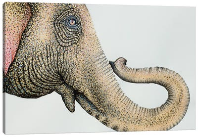 Spotted Asian Elephant II Canvas Art Print