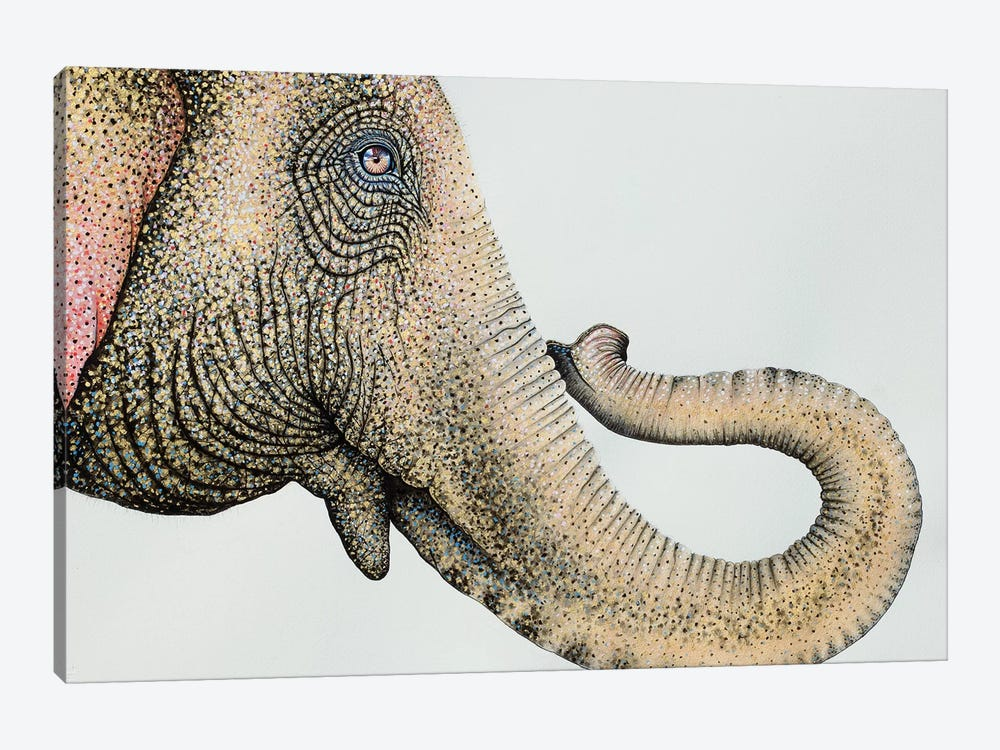Spotted Asian Elephant II by Michelle Faber 1-piece Canvas Wall Art
