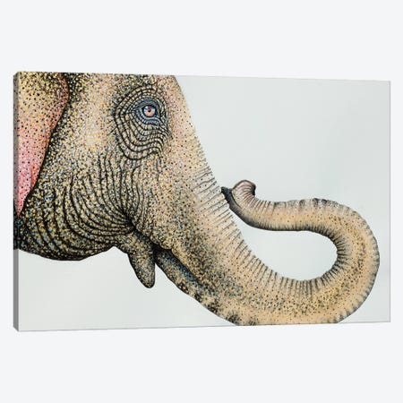 Spotted Asian Elephant II Canvas Print #FAB50} by Michelle Faber Art Print