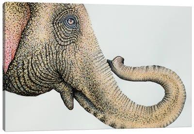 Spotted Asian Elephant II Canvas Art Print
