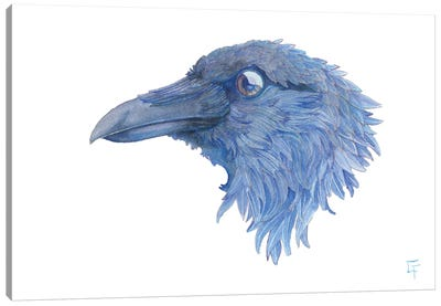Raven Canvas Art Print