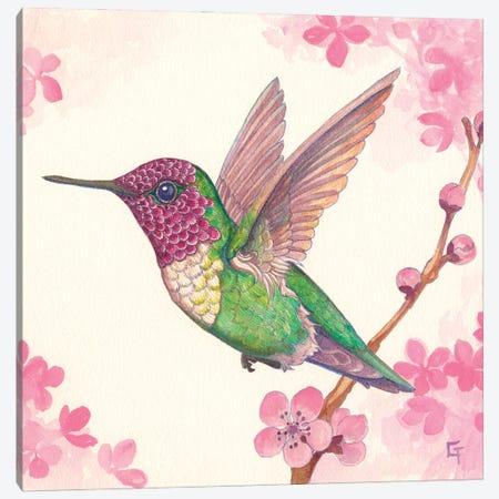 Anna's Hummingbird Canvas Print #FAI18} by Might Fly Art & Illustration Canvas Artwork