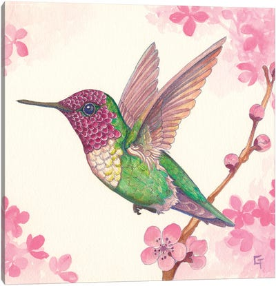 Anna's Hummingbird Canvas Art Print