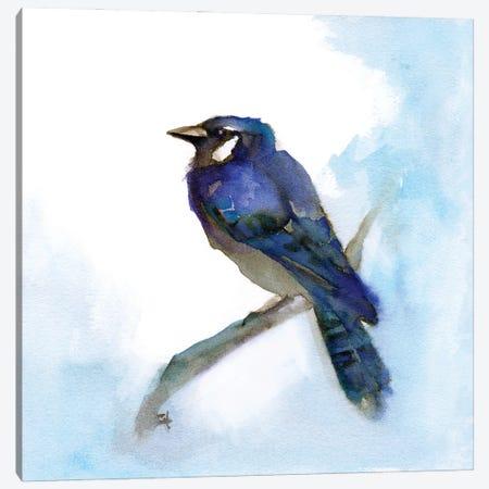 Blue Jay Canvas Print #FAI52} by Might Fly Art & Illustration Canvas Art