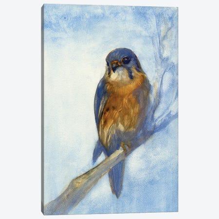 Kestrel Canvas Print #FAI54} by Might Fly Art & Illustration Canvas Print