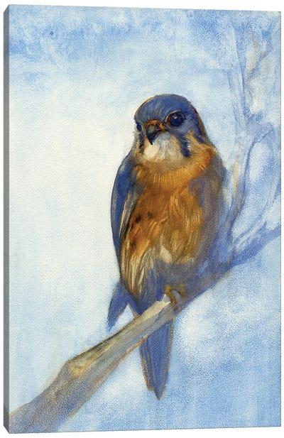 Kestrel Canvas Art Print