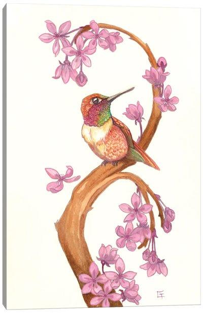 Rufous Humming Bird Canvas Art Print