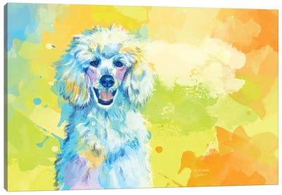 Vibrant Life Of A White Poodle Canvas Art Print