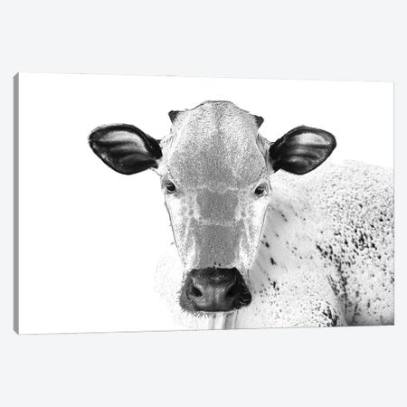 Black And White Cow Canvas Print #FAU100} by Eric Fausnacht Canvas Wall Art
