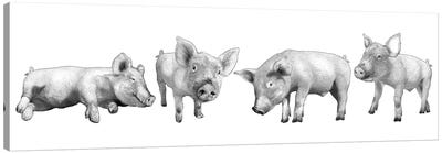 Four Piglets Black And White Canvas Art Print