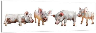 Four Piglets Canvas Art Print
