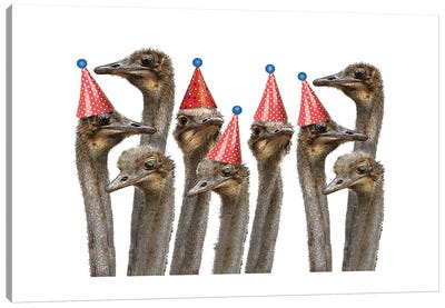 Ostriches In Hats Canvas Art Print