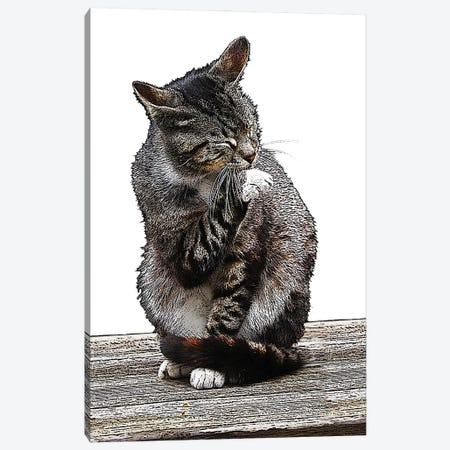 Gray Cat Ireland Canvas Print #FAU166} by Eric Fausnacht Canvas Print