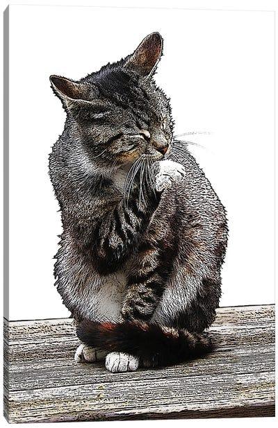 Gray Cat Ireland Canvas Art Print