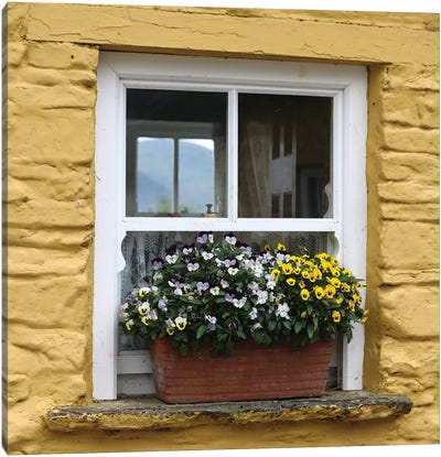 Ireland Yellow Farmhouse With Pansies Canvas Art Print
